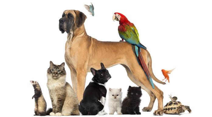 animales4