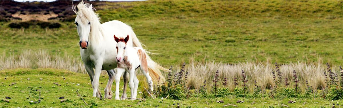 caballos_blancos